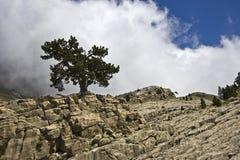 samotny ładny drzewo Zdjęcie Stock