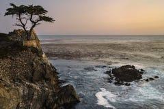 Samotny cyprys Zdjęcie Royalty Free