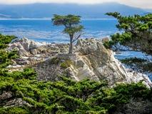 Samotny cyprys, otoczak plaża, CA Fotografia Stock