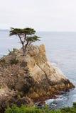 Samotny cyprys, otoczak plaża, Kalifornia Zdjęcia Royalty Free