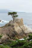 Samotny cyprys, otoczak plaża, Kalifornia Zdjęcie Stock