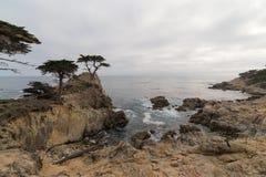 Samotny cyprys, otoczak plaża, Kalifornia Obrazy Royalty Free