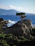 Samotny cyprys przy otoczak plażą w Kalifornia Obraz Stock
