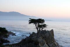 Samotny Cyprysowy drzewo Obrazy Royalty Free