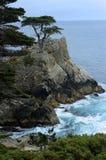 Samotny Cyprysowy drzewo w Monterey zatoce wzdłuż 17 mil przejażdżki zdjęcia royalty free