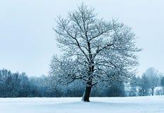 Samotny Dębowy drzewo fotografia stock