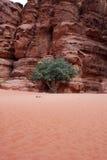 samotny drzewo Zdjęcia Royalty Free