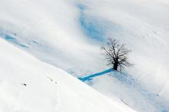 samotny drzewo Zdjęcie Stock