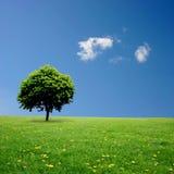 samotny drzewo Obraz Stock
