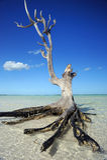 samotny drzewo zdjęcie royalty free