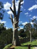 samotny drzewo Obrazy Royalty Free