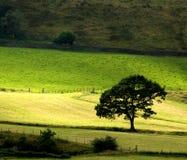samotny drzewo Fotografia Royalty Free