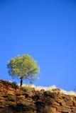 samotny drzewo Obrazy Stock