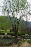 Samotny drzewo blisko jeziora podczas wczesnej wiosny w Chiny Zdjęcia Stock