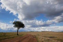 Samotny drzewo i chmurni nieba Zdjęcia Royalty Free