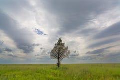 Samotny drzewo i chmury Zdjęcia Royalty Free
