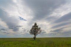 Samotny drzewo i chmury Zdjęcia Stock