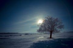 Samotny drzewo i księżyc w nocy fotografia royalty free