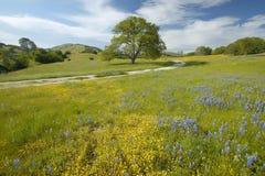Samotny drzewo i wiosna kolorowy bukiet kwitniemy Obrazy Royalty Free