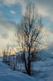 Samotny drzewo i zima zmierzch Obrazy Royalty Free
