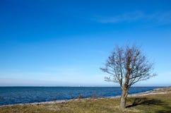 Samotny drzewo linią brzegową Zdjęcie Royalty Free