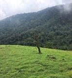 Samotny drzewo na łacie zielone łąki zdjęcia stock