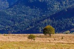Samotny drzewo na błękitnym drewnianym tle Fotografia Stock