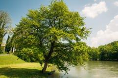 Samotny drzewo na brzeg rzeki obrazy royalty free