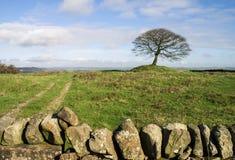 Samotny drzewo na Grindon Cumuje, Derbyshire Fotografia Stock