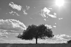 Samotny drzewo na horyzoncie Fotografia Stock