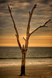Samotny drzewo na plaży przy zmierzchem Obrazy Royalty Free