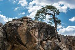 Samotny drzewo na rockowym odsłanianiu obraz stock