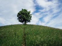 Samotny drzewo na wzgórzu Fotografia Royalty Free