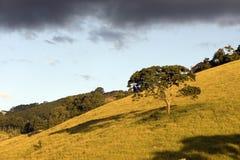 Samotny drzewo pięknie zaświecał evening światło Obrazy Stock