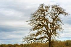 Samotny drzewo pod chmurnymi niebami obraz royalty free