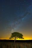 Samotny drzewo pod milkyway Fotografia Stock