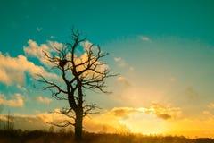 Samotny drzewo przeciw zimnemu zmierzchu niebu Zdjęcia Stock