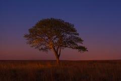 Samotny drzewo przy błękitną godziną Fotografia Royalty Free