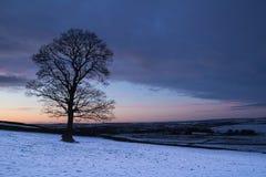 Samotny drzewo przy półmrokiem obrazy stock