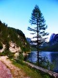Samotny drzewo przy pięknym Gosau Widzii w Austria obrazy royalty free