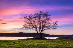Samotny drzewo przy Różowym zmierzchem obraz stock