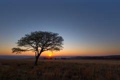 Samotny drzewo przy wschodem słońca Obrazy Royalty Free