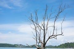 Samotny drzewo stojak w wybrzeżu i niebieskie niebo, góra, morze jest półdupkami Obraz Stock