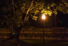 Samotny drzewo towarzyszący z latarni ulicznej poczta przy nocą fotografia stock