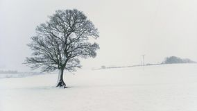 Samotny drzewo w miecielicie obraz stock