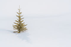 Samotny drzewo w śniegu Fotografia Royalty Free