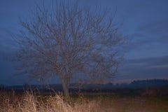 Samotny drzewo w obszarze wiejskim Zdjęcia Royalty Free