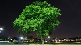 Samotny drzewo w parku obraz stock