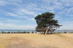 Samotny drzewo w Philip wyspie zdjęcia stock