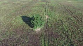 Samotny drzewo w polach zdjęcie wideo
